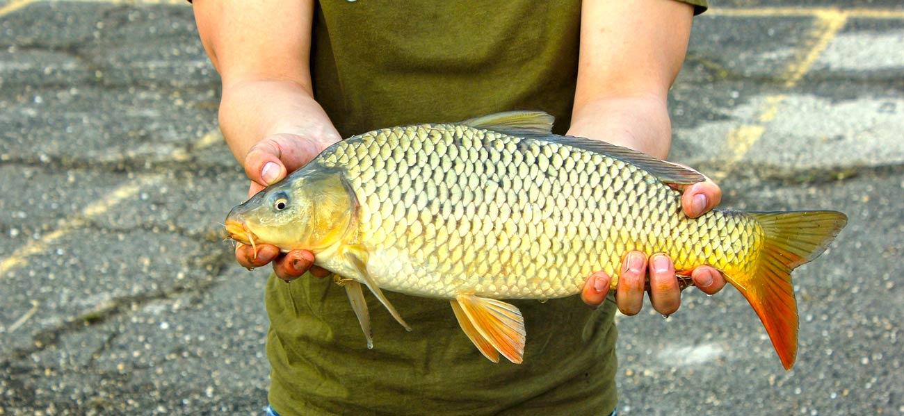 Świeże ryby